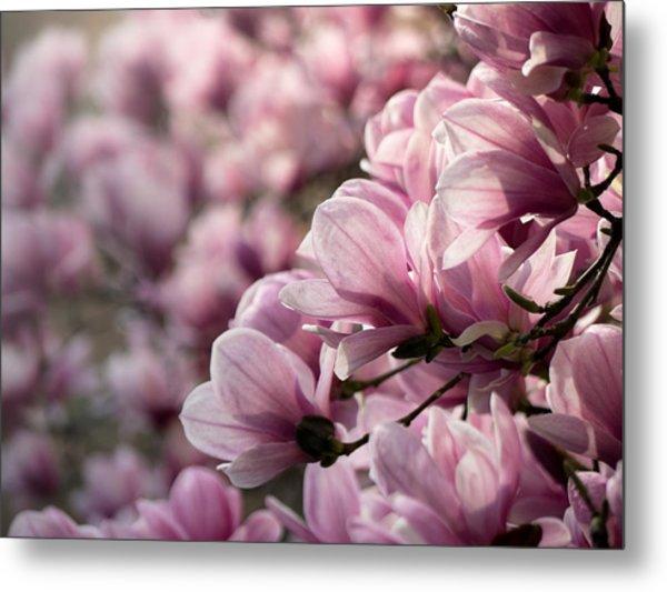 Magnolia Layers 2 Metal Print