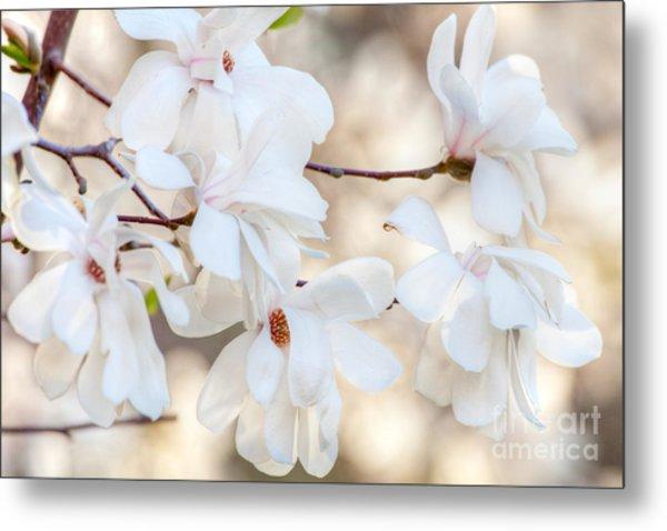 Magnolia Spring 1 Metal Print