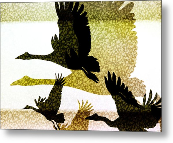Magpie Geese In Flight Metal Print
