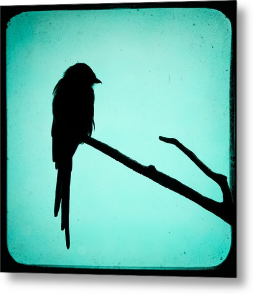 Metal Print featuring the photograph Magpie Shrike Silhouette by Gary Heller