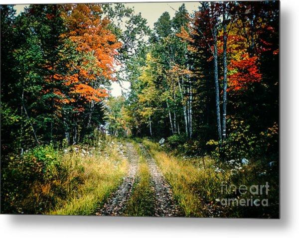 Maine Back Road Metal Print
