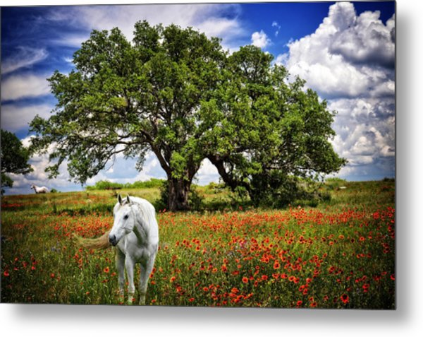 Majestic Beauty Metal Print