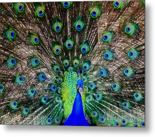 Majestic Blue Metal Print