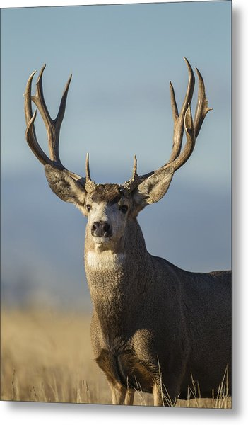 Majestic Buck Metal Print