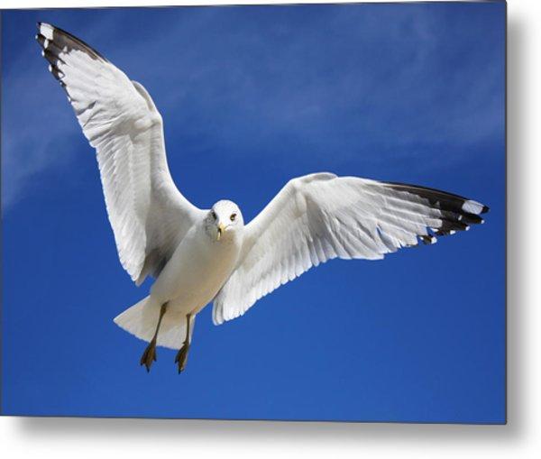 Majestic Seagull Metal Print