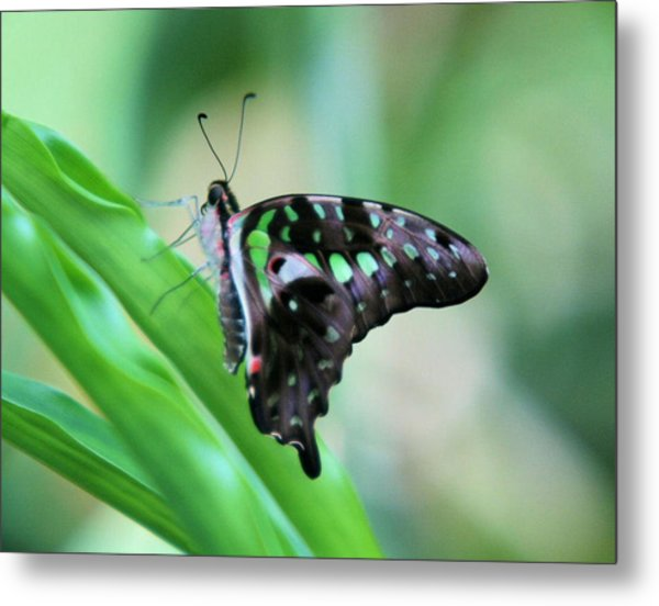 Malachite Butterfly Metal Print