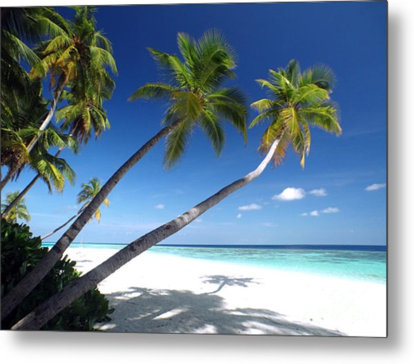 Maldives 05 Metal Print by Giorgio Darrigo