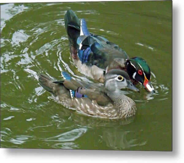 Male And Female Wood Ducks Metal Print