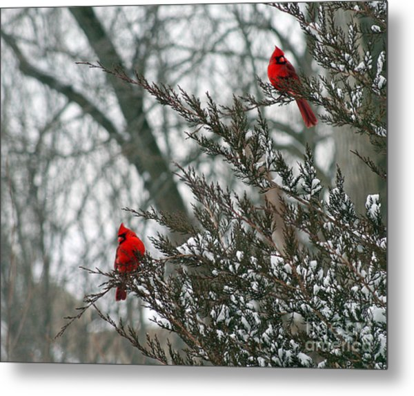 Male Cardinal Pair Metal Print
