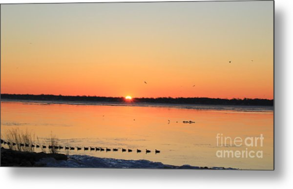Mallards At Sunrise Metal Print