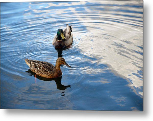 Mallards Lake Hopatcong Nj Metal Print