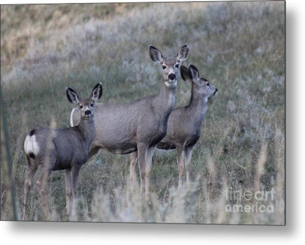 Mama And Babies Metal Print by Brenda Henley