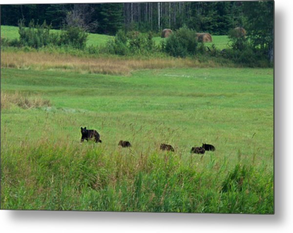 Mama Bear And 4 Cubs Metal Print