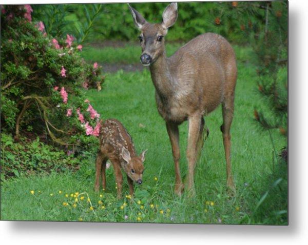 Mama Deer And Baby Bambi Metal Print
