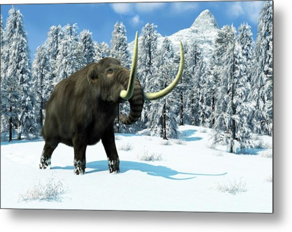 Mammoth Metal Print by Roger Harris