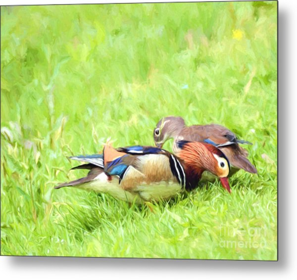 Mandarin Duck Couple Metal Print