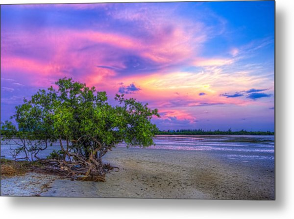 Mangrove By The Bay Metal Print