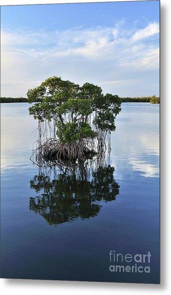 Mangrove Island Metal Print by Andres LaBrada