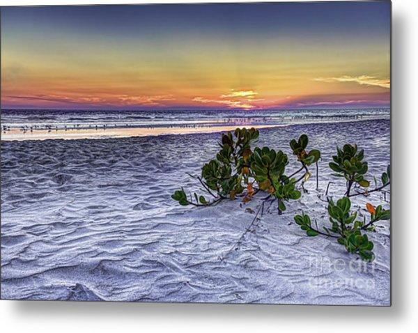 Mangrove On The Beach Metal Print