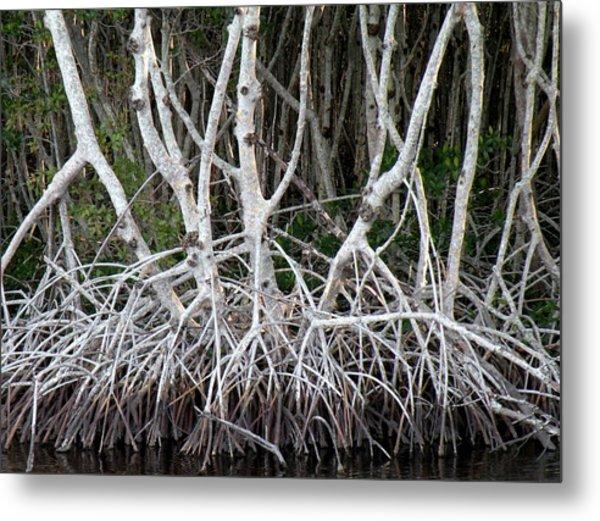 Mangrove Roots Metal Print