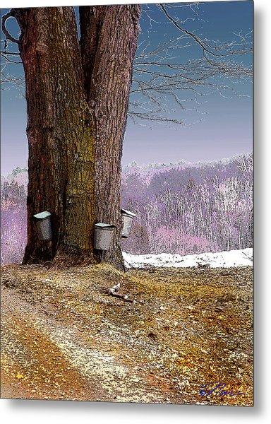 Maple Buckets Metal Print