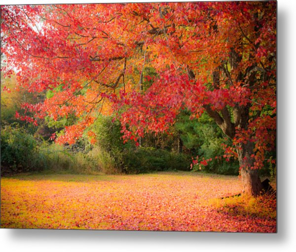 Maple In Red And Orange Metal Print