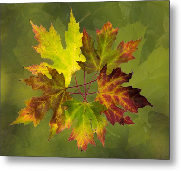 Maple Leaf Arrangement Metal Print