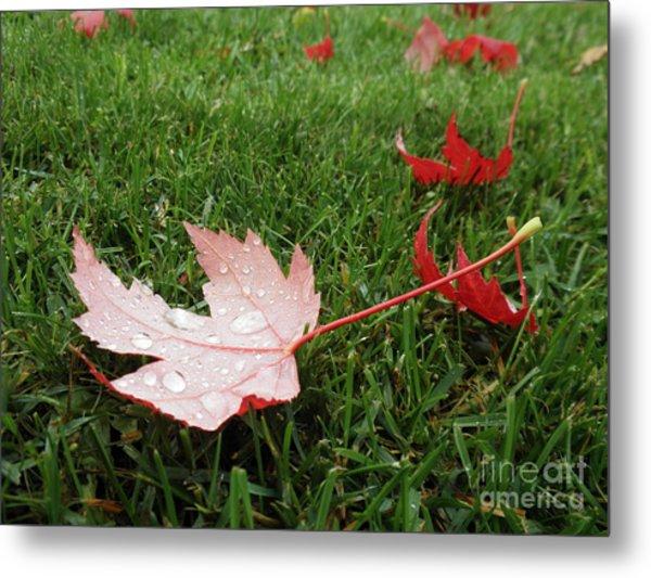 Maple Leaf In Canada Metal Print