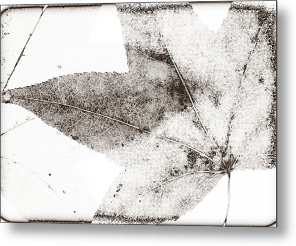 Maple Leaf Nature 1 Macro  Image Art Metal Print