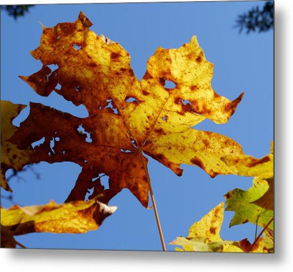 Maple Leaf On A Blue Sky Metal Print