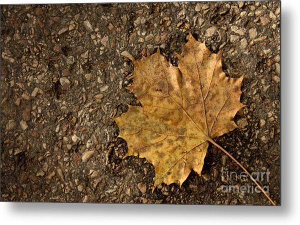 Maple Leaf On The Ground Metal Print by Jolanta Meskauskiene
