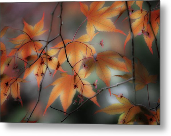 Maple Leaves 2 Metal Print