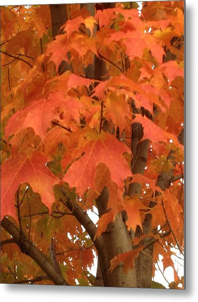 Maple Orange Metal Print