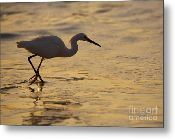 March Of The Egret Metal Print