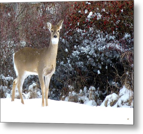 March Snow And A Doe Metal Print