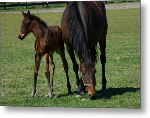 Mare And Her Foal 1 Metal Print