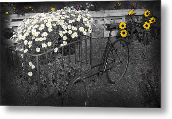 Marguerites And Bicycle Metal Print
