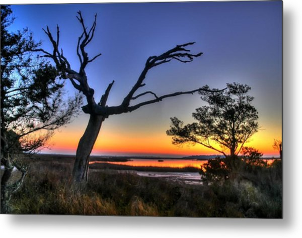 Marsh Tree Sunrise Metal Print