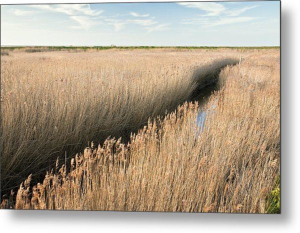 Marshland, Uk Metal Print by Science Photo Library