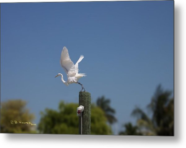 Mary's Egret Metal Print