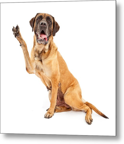 Mastiff Dog With Paw In Peace Sign Metal Print