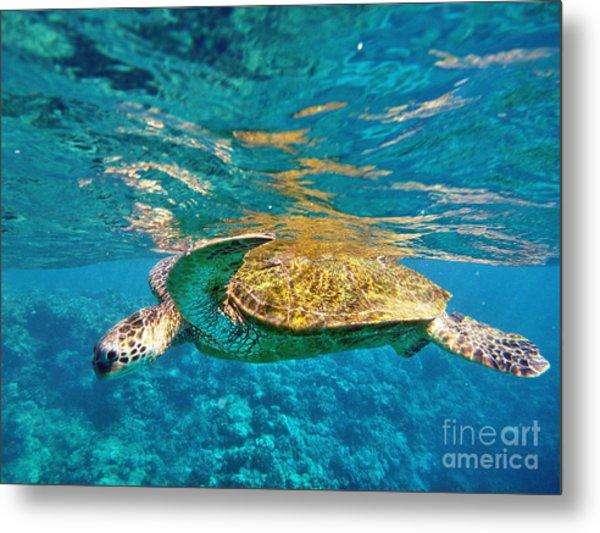 Maui Sea Turtle Metal Print