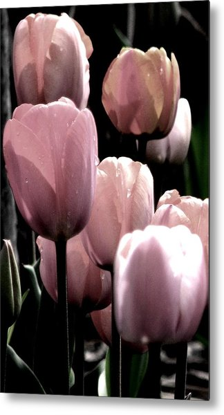 Mauve In The Morning Metal Print