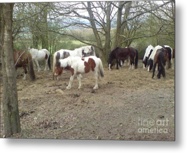 May Hill Ponies 2 Metal Print