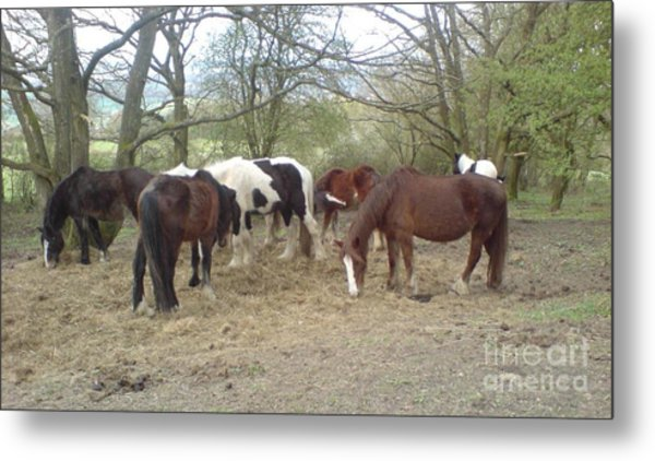 May Hill Ponies 3 Metal Print