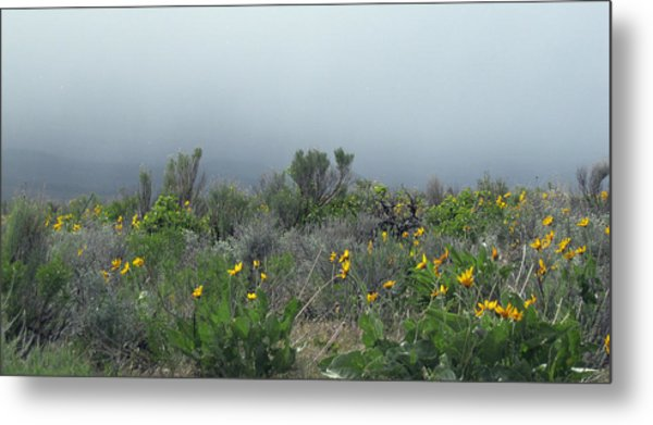 Meadow Fog Metal Print