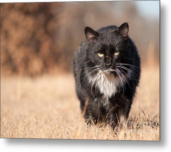 Mean Looking Softie Metal Print