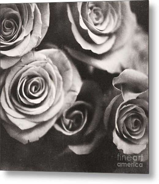 Medium Format Analog Black And White Photo Of White Rose Flowers Metal Print by Edward Olive