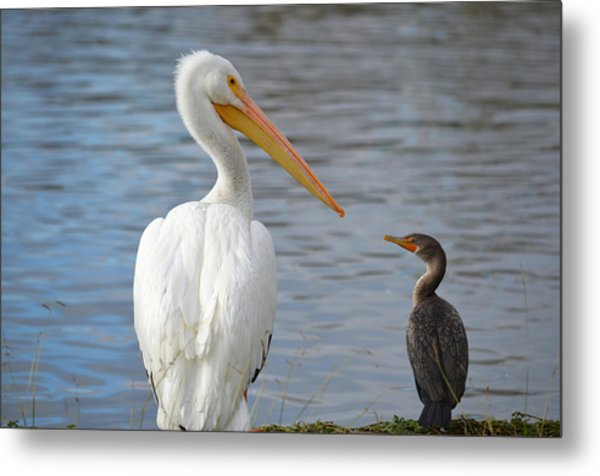 Meeting Of Beaks Metal Print