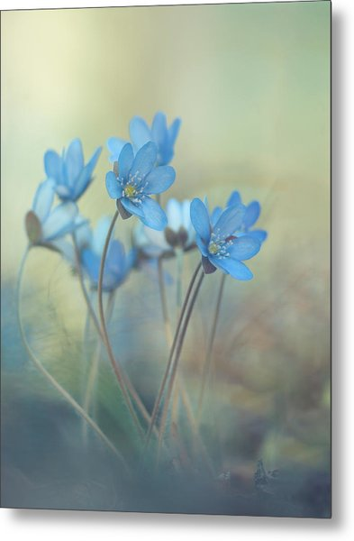 Memories Of A Spring Metal Print